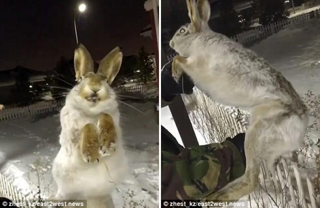 Đôi mắt ám ảnh của thỏ và chó chết cứng vì đóng băng trong nền nhiệt độ -56 độ C - Ảnh 1.