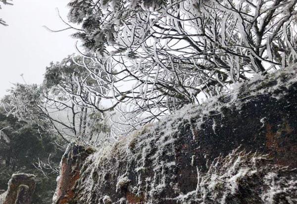 Sa Pa bất ngờ xuất hiện tuyết rơi dày đặc trong sáng nay - Ảnh 8.