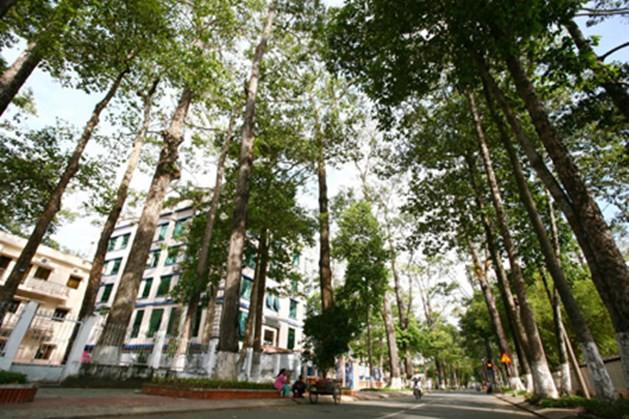 Truyền dịch cứu 1.000 cây cổ thụ: Không sử dụng túi truyền dịch của Trung Quốc - Ảnh 2.