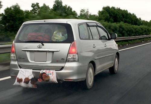 Chú vịt trắng ngóc đầu, nằm phía sau ô tô - hình ảnh hài hước gây chú ý trong ngày chủ nhật - Ảnh 4.