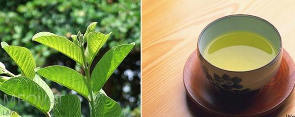 Loại lá dân dã công dụng không kém trà xanh: Việt Nam có nhiều nhưng còn bị bỏ phí  - Ảnh 1.