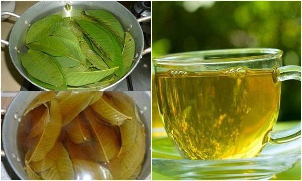 Loại lá dân dã công dụng không kém trà xanh: Việt Nam có nhiều nhưng còn bị bỏ phí  - Ảnh 2.