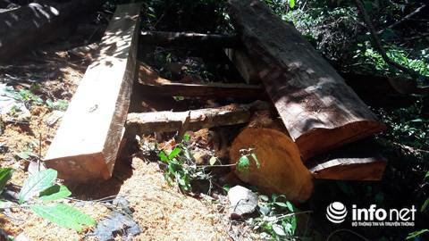 Quảng Bình: Rừng đệm di sản thế giới Phong Nha - Kẻ Bàng bị xẻ thịt - Ảnh 1.