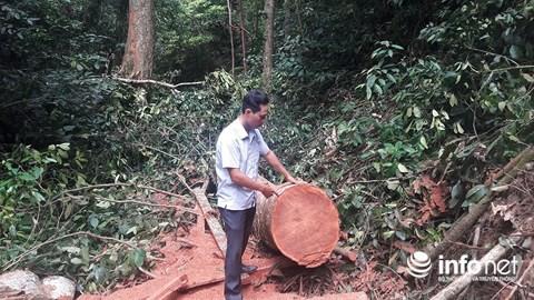 Quảng Bình: Rừng đệm di sản thế giới Phong Nha - Kẻ Bàng bị xẻ thịt - Ảnh 2.