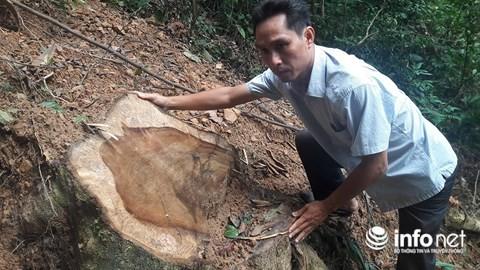 Quảng Bình: Rừng đệm di sản thế giới Phong Nha - Kẻ Bàng bị xẻ thịt - Ảnh 4.