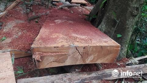 Quảng Bình: Rừng đệm di sản thế giới Phong Nha - Kẻ Bàng bị xẻ thịt - Ảnh 5.