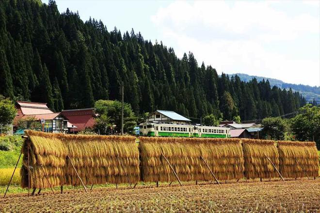 Tadami Line: Chuyến tàu hỏa nhỏ xinh nhất Nhật Bản, đi qua 4 mùa là 4 khung trời khác nhau - Ảnh 13.