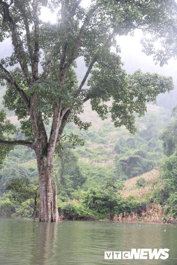 Thung lũng khô cằn đột ngột thành hồ nước và đàn 'cá ma' trong núi chui ra - Ảnh 7.