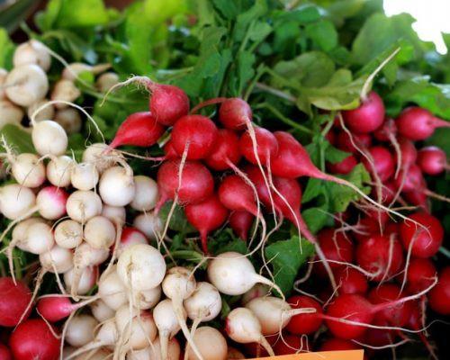 4 tác dụng tuyệt vời của củ cải đối với sức khỏe trong mùa đông - Ảnh 1.