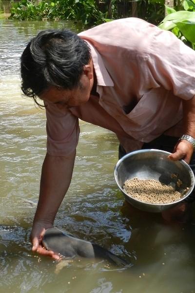 Lão nông miền Tây ăn chay nuôi chục tấn cá sông như... thú cưng - Ảnh 1.