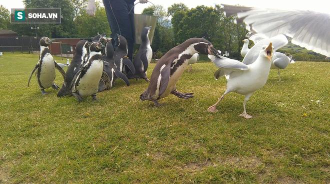 Hải âu quyết chiến với đồng loại, chim cánh cụt vào can cũng bị đánh - Ảnh 1.