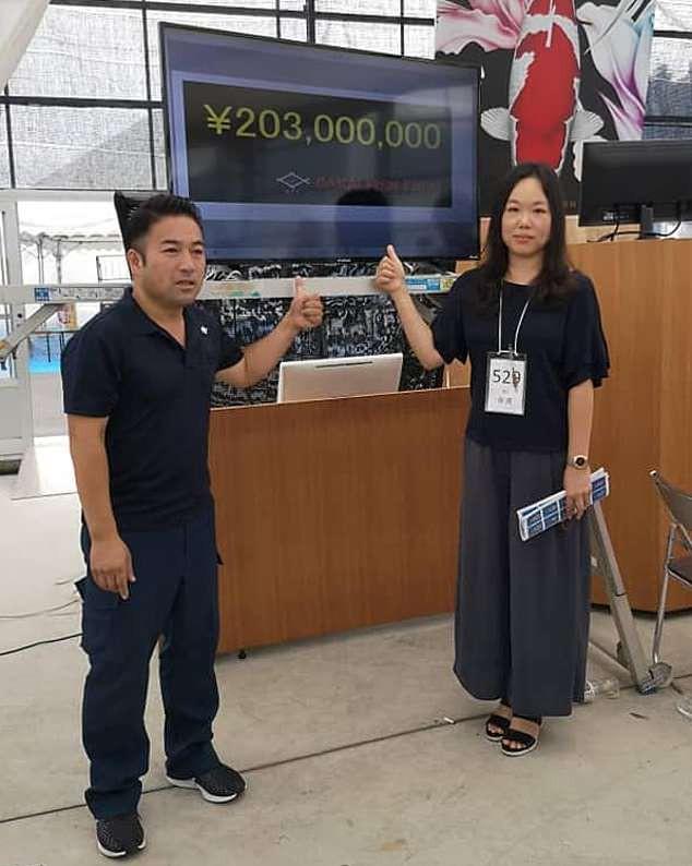 Cá Koi dài hơn 1 mét có giá bán kỷ lục: Chạm mức gần 42 tỷ đồng - Ảnh 3.