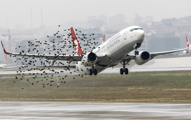 Điều gì sẽ xảy ra khi những chú chim bay vào động cơ máy bay? - Ảnh 1.