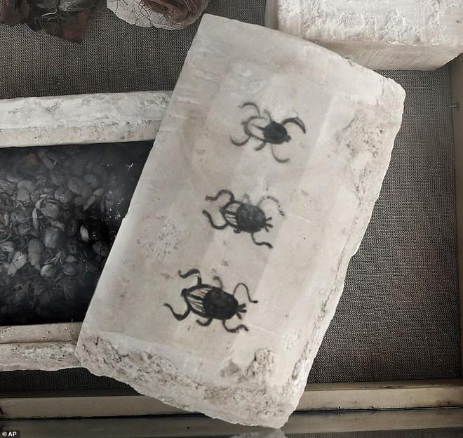 Cận cảnh xác ướp bọ hung và mèo bên trong ngôi mộ Ai Cập 4.500 năm tuổi - Ảnh 8.