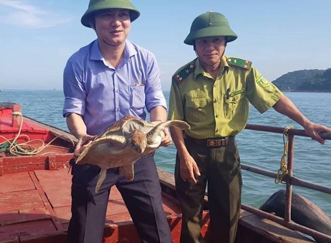 Rùa quý hiếm nặng 15kg mắc lưới ngư dân trên biển Hà Tĩnh - Ảnh 1.