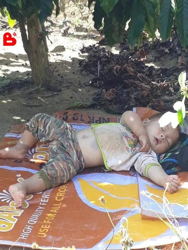 Hình ảnh cậu bé bụ bẫm nằm ngủ dưới gốc cây cà phê khi theo bố mẹ lên rẫy đốn tim cộng đồng mạng vì quá sức dễ thương - Ảnh 2.