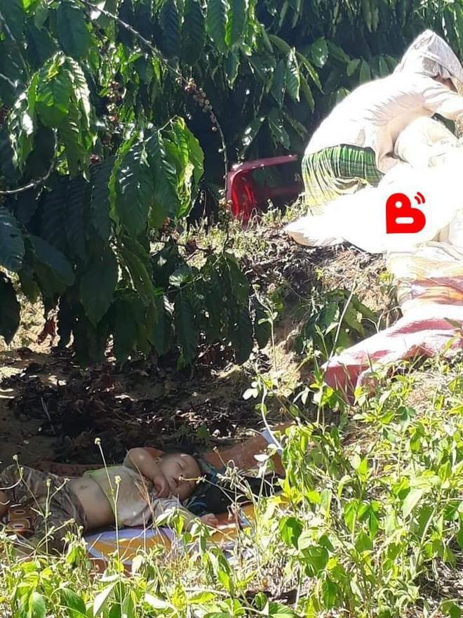 Hình ảnh cậu bé bụ bẫm nằm ngủ dưới gốc cây cà phê khi theo bố mẹ lên rẫy đốn tim cộng đồng mạng vì quá sức dễ thương - Ảnh 3.