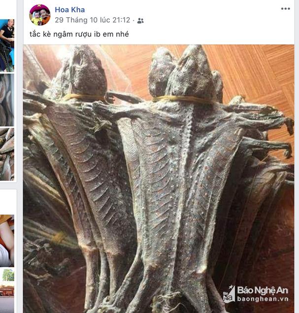 Nữ Phó Chủ tịch Mặt trận xã rao bán động vật hoang dã trên facebook - Ảnh 1.