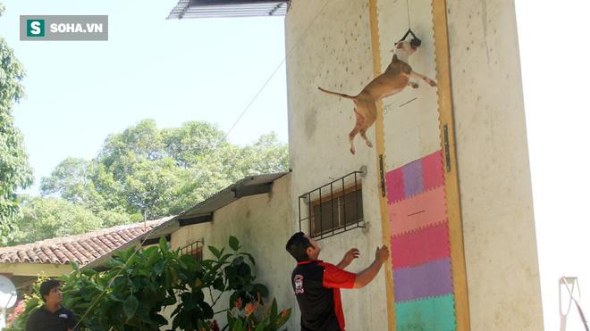 Báo hoa mai sử dụng tuyệt chiêu của chó Pibull để xử lý con mồi cứng đầu - Ảnh 1.