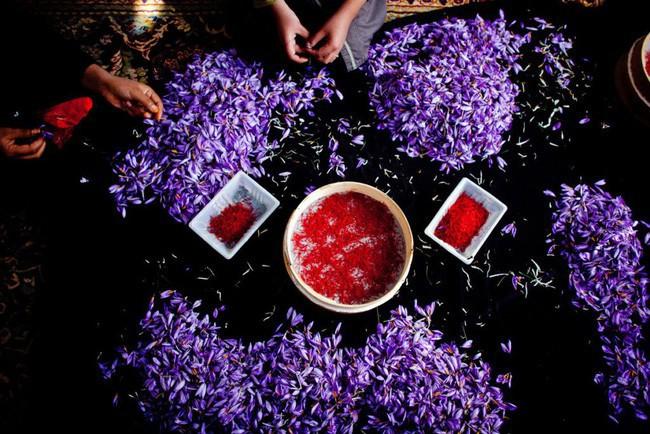 Bí mật thú vị của saffron - gia vị đắt nhất thế giới gần 1 tỷ/kg từng được Nữ hoàng Ai Cập dùng dưỡng nhan sắc - Ảnh 3.