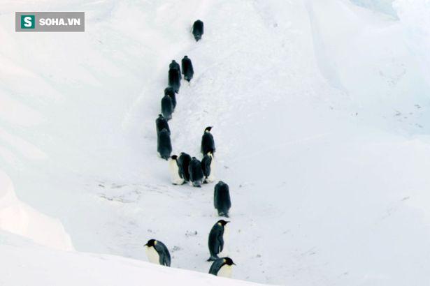 Giải cứu đàn chim cánh cụt mắc kẹt trong khe núi -60 độ C: Thử thách của đoàn làm phim BBC - Ảnh 1.