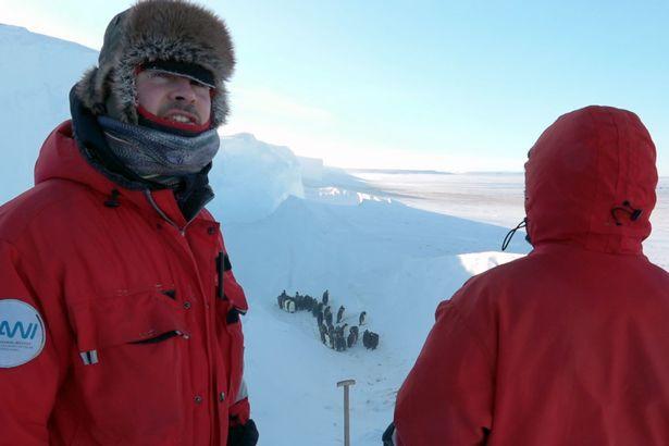 Giải cứu đàn chim cánh cụt mắc kẹt trong khe núi -60 độ C: Thử thách của đoàn làm phim BBC - Ảnh 3.