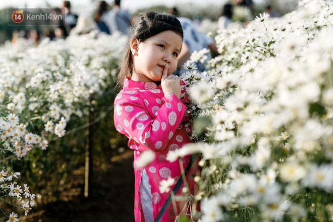 Vườn cúc hoạ mi ở Hà Nội thất thủ cuối tuần: 1 mét vuông có chục nhiếp ảnh gia và mẫu - Ảnh 4.