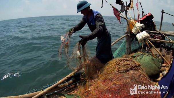 """Ngư dân Nghệ An """"săn"""" cá đục thu tiền triệu mỗi ngày - Ảnh 1."""