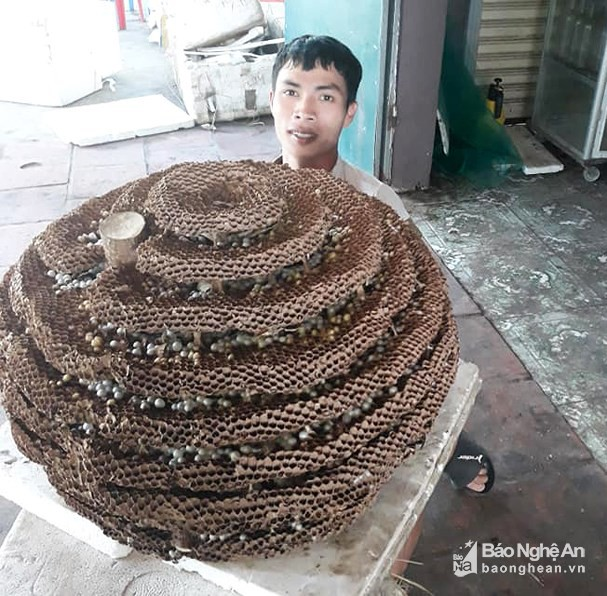 """Người dân săn được tổ ong """"khủng"""" 10 tầng ở biên giới Nghệ An - Lào - Ảnh 2."""