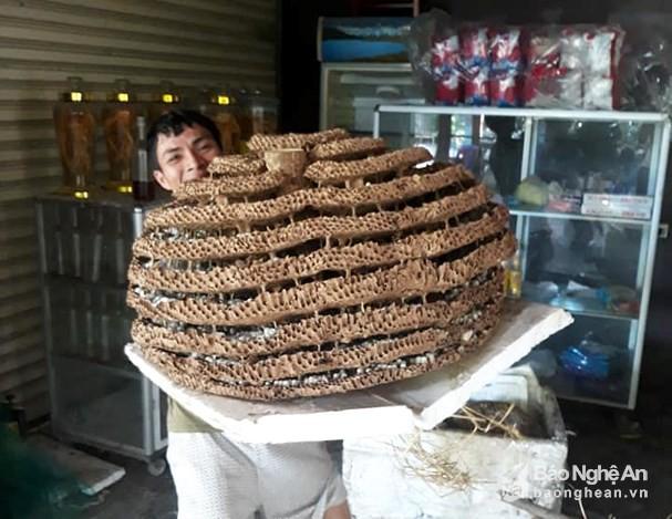 """Người dân săn được tổ ong """"khủng"""" 10 tầng ở biên giới Nghệ An - Lào - Ảnh 4."""