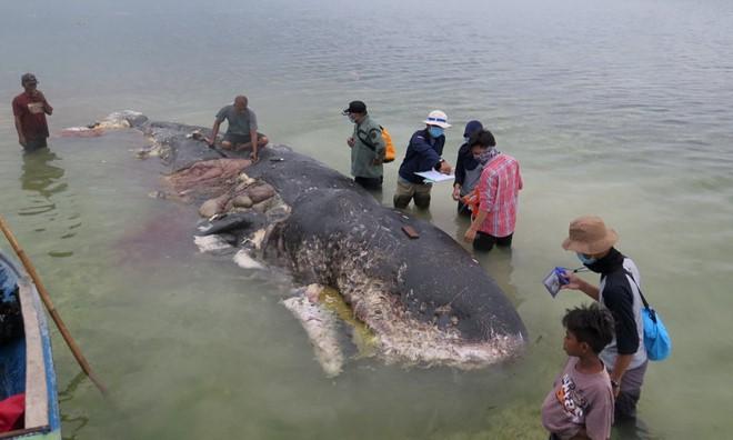 24h qua ảnh: Cá voi chết vì nuốt hơn 1.000 mảnh nhựa vào bụng - Ảnh 4.