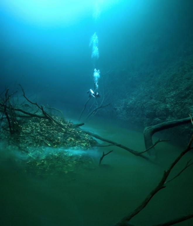 Những phát hiện ngoài sức tưởng tượng chứng minh đại dương là thế giới kỳ dị, bí ẩn - Ảnh 6.