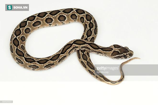 Đang treo mình trên cây, rắn độc bị đàn chó kéo xuống, hứng chịu màn tứ mã phanh thây  - Ảnh 1.