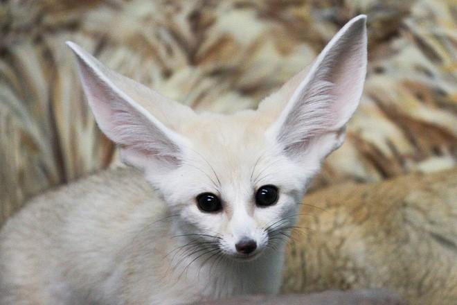 6 loài vật có khả năng thích nghi tuyệt vời nhất trong sa mạc khô cằn - Ảnh 1.