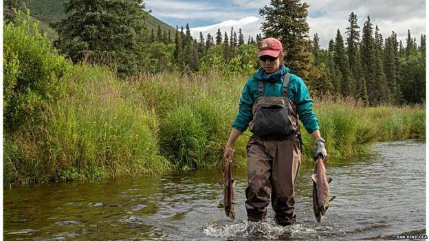Kiên trì ném 300 tấn xác cá hồi suốt hơn 20 năm, nhóm nghiên cứu phát hiện điều bất ngờ - Ảnh 3.