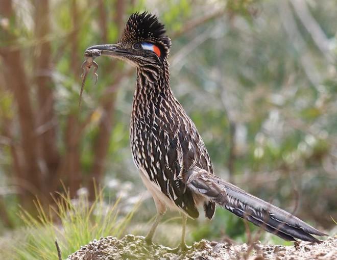 6 loài vật có khả năng thích nghi tuyệt vời nhất trong sa mạc khô cằn - Ảnh 14.