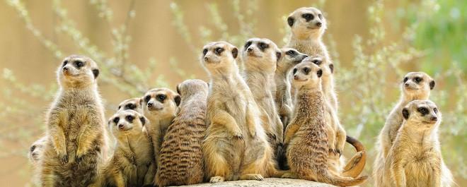 6 loài vật có khả năng thích nghi tuyệt vời nhất trong sa mạc khô cằn - Ảnh 3.