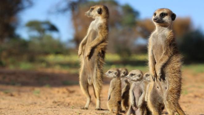 6 loài vật có khả năng thích nghi tuyệt vời nhất trong sa mạc khô cằn - Ảnh 4.