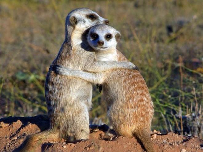 6 loài vật có khả năng thích nghi tuyệt vời nhất trong sa mạc khô cằn - Ảnh 6.