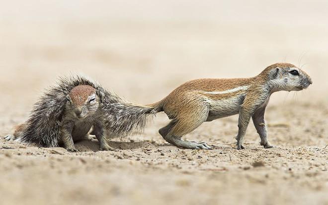 6 loài vật có khả năng thích nghi tuyệt vời nhất trong sa mạc khô cằn - Ảnh 10.
