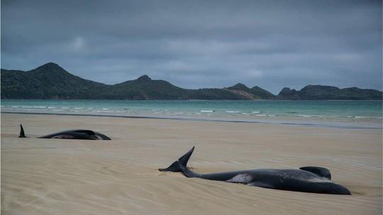 Nước mắt 145 con cá voi chết trên bờ biển New Zealand - Ảnh 7.