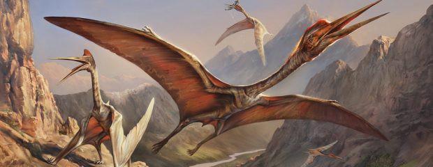 Rồng biết bay và phun lửa: Truyền thuyết hay loài vật có thật? - Ảnh 1.