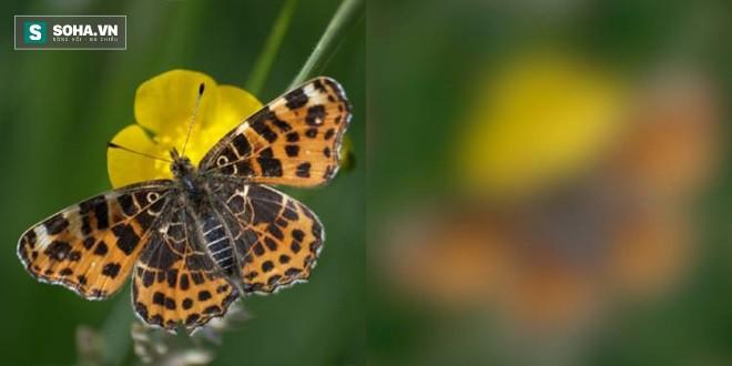 Thế giới qua thị giác động vật: Con người thực sự giỏi, nhìn được chi tiết hơn đa số loài - Ảnh 1.