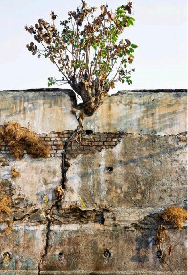 Mukesh: Nhà máy dệt lâu đời nhất Ấn Độ, gần 4 thập kỷ bị bỏ hoang với những lời đồn thổi rợn người - Ảnh 5.