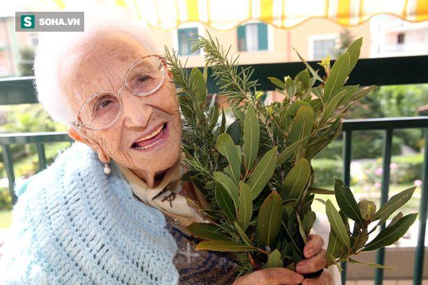 Ngôi làng có tới 300 người sống 100 tuổi nhờ ăn lá gia vị này: Bạn rất nên trồng một cây - Ảnh 1.