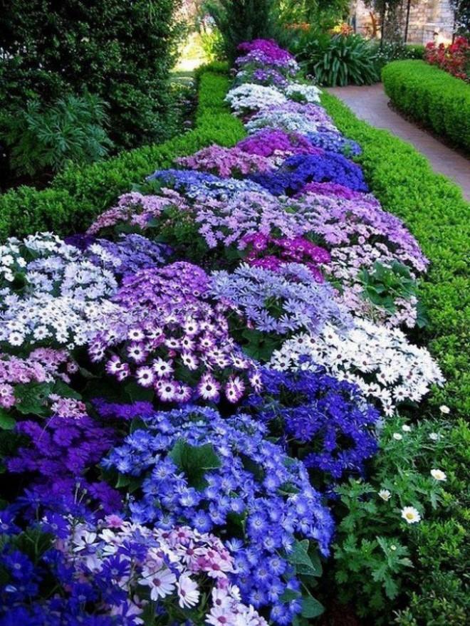 12 ý tưởng thiết kế khu vườn đẹp với biến tấu của hoa khiến bạn không thể rời mắt - Ảnh 6.