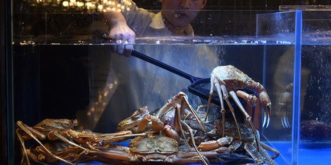 Nhà hàng lẩu hữu cơ đầu tiên ở Thượng Hải gây ấn tượng khi cho thực khách tự thu hoạch rau ngay tại bàn - Ảnh 4.