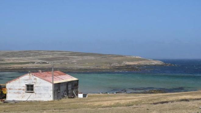 Quá mệt mỏi với bè lũ chim cánh cụt cùng 6000 con cừu, gia đình người Anh rao bán cả hòn đảo tặng kèm mọi con vật trên đó - Ảnh 2.