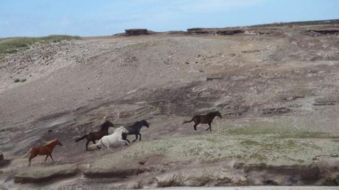 Quá mệt mỏi với bè lũ chim cánh cụt cùng 6000 con cừu, gia đình người Anh rao bán cả hòn đảo tặng kèm mọi con vật trên đó - Ảnh 6.