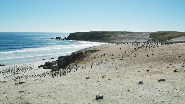 Quá mệt mỏi với bè lũ chim cánh cụt cùng 6000 con cừu, gia đình người Anh rao bán cả hòn đảo tặng kèm mọi con vật trên đó - Ảnh 7.